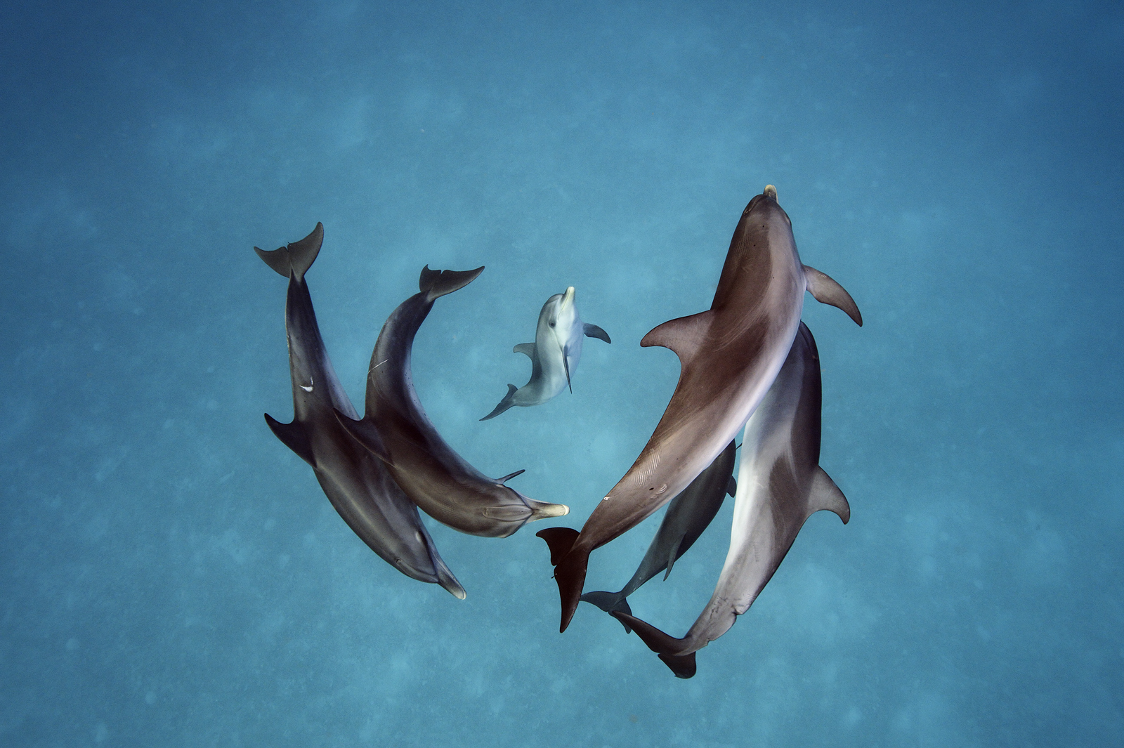 dolphins brian skerry
