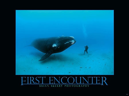 First Encounter Whale Poster | Brian Skerry Photography